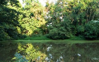 Pond at the Inn on Poplar Hill in Orange Virginia