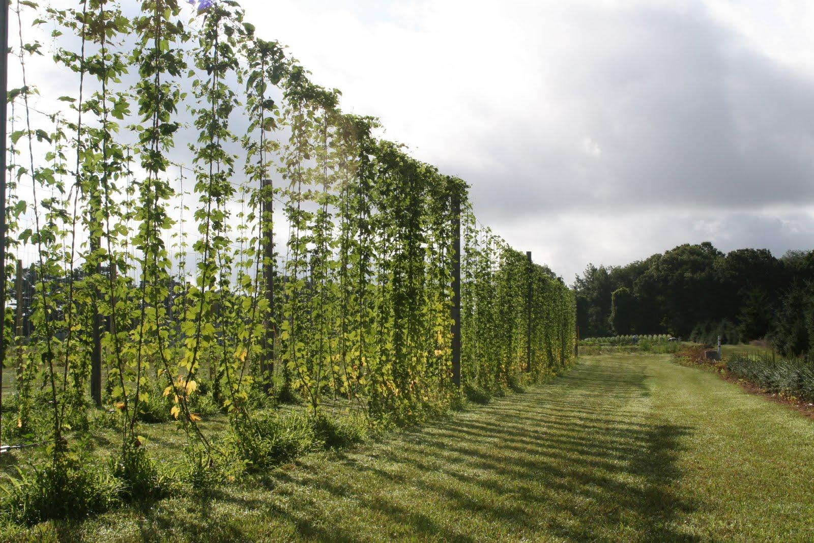 Picnic in the Beer Garden - innonpoplarhill.com